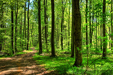 Atemweg - Wald