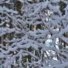 Der Schnee hat Spuren hinterlassen.